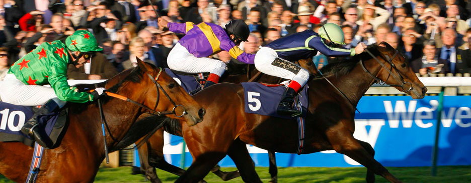 The Pursuit of Thoroughbred Excellence